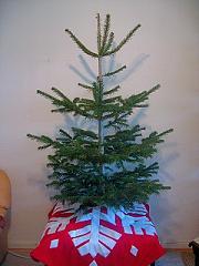 tree07 1.jpg