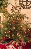 tree08.jpg